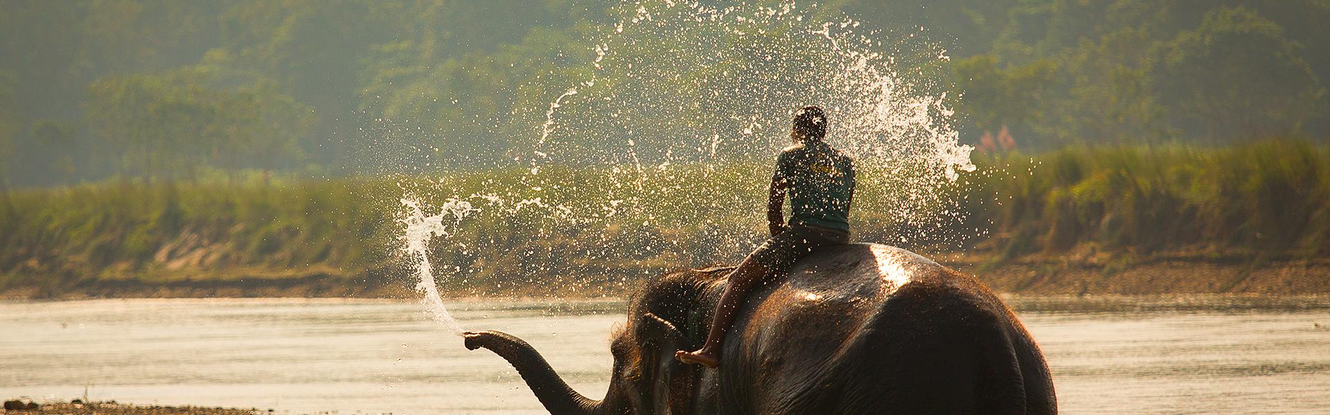 Indijos dramblys